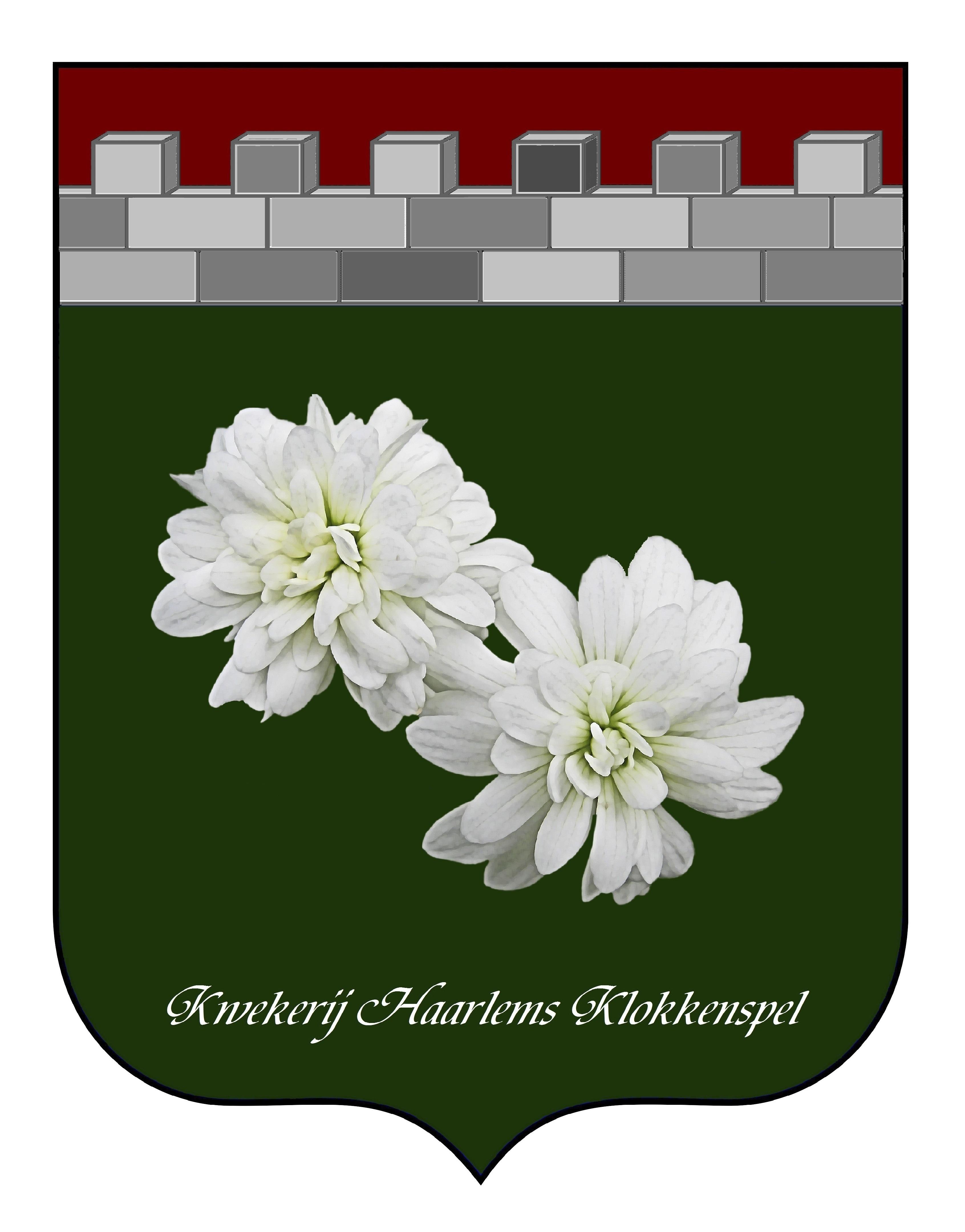 Haarlems Klokkenspel, saxifraga granulata plena, stinzenplant, knolsteenbreek
